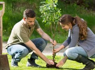 Plantbegeleiding