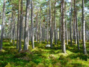 bomen-bos-zien
