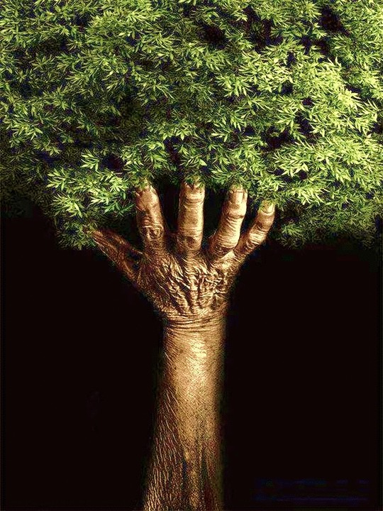Urnen waar een boom of heester uit groeit ter herinnering