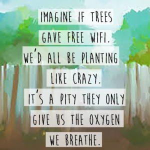 wifi trees