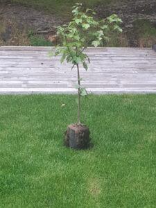 boom voor Jos